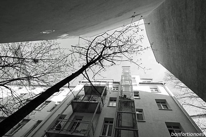 Hinterhof-Baum sucht Licht; Berlin-Prenzlauer Berg